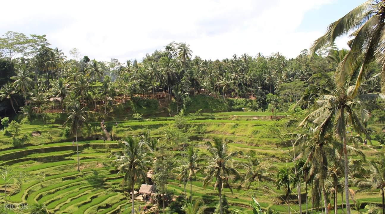 Tegelalang Rice Field