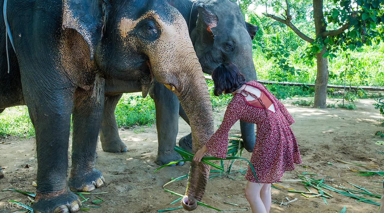 ปางช้างในจังหวัดกาญจนบุรี