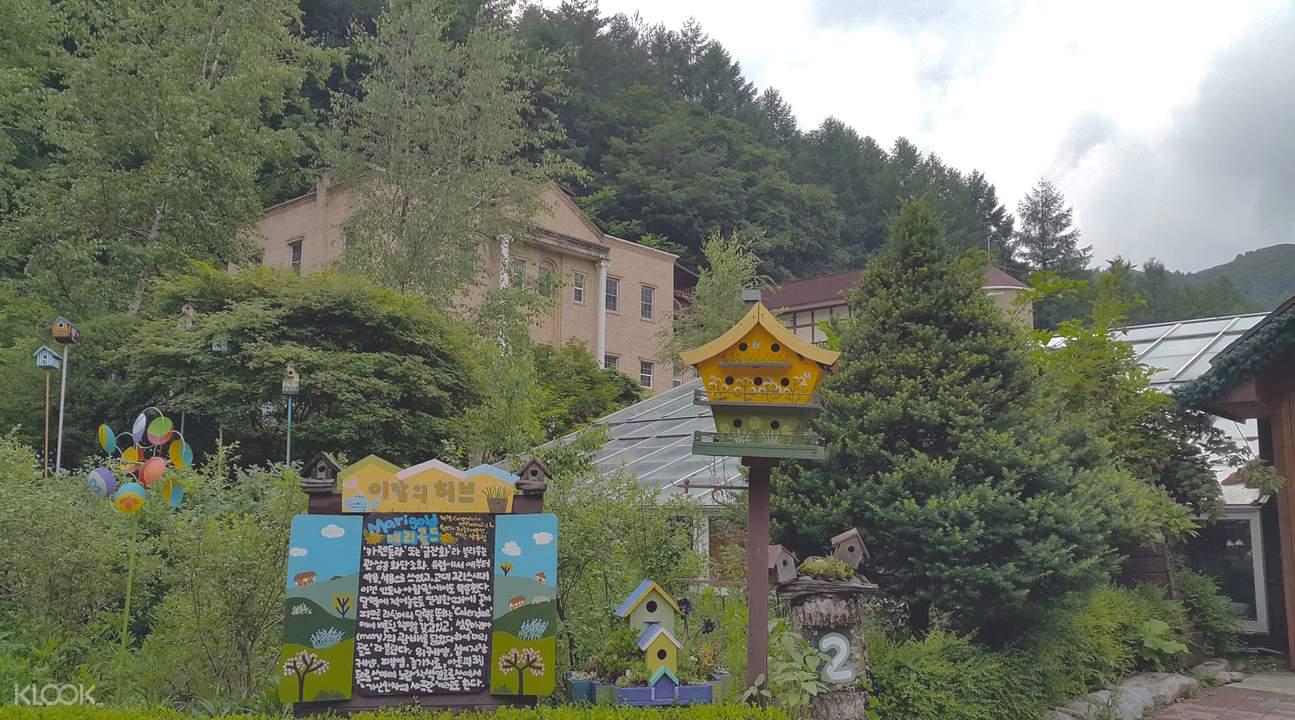 ginseng picking and herb garden tour
