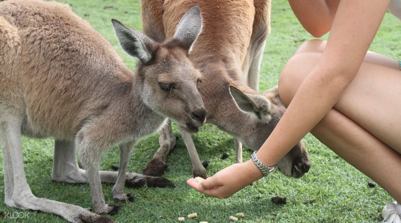 尖峰石陣一日遊 +動物園與滑沙