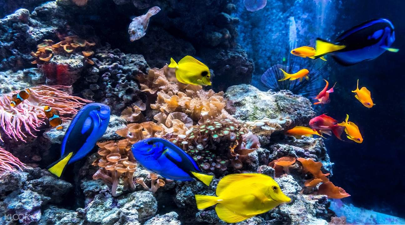 fishes and corals inside the aquarium in SEA LIFE