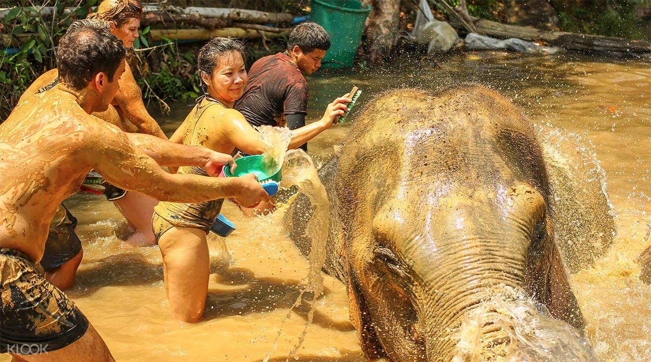 泰国清迈大象丛林保护区