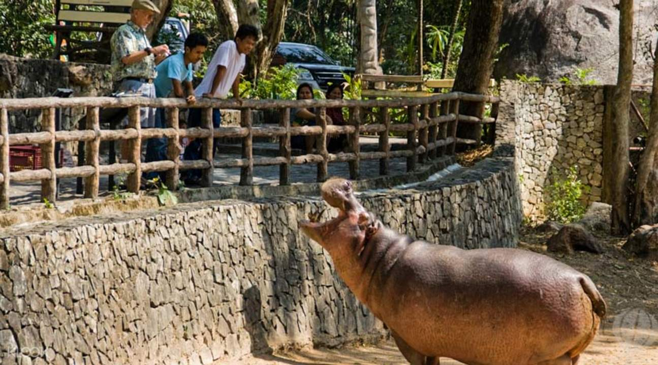Open enclosure zoo