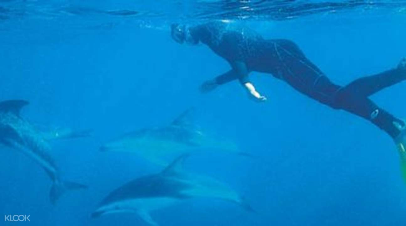 swim with dolphins New Zealand