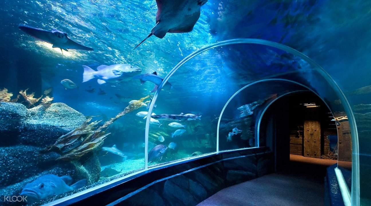 aquarium in SEA LIFE