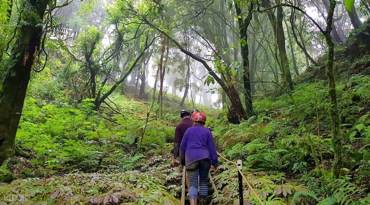 tourists exploring a forest in new zealand