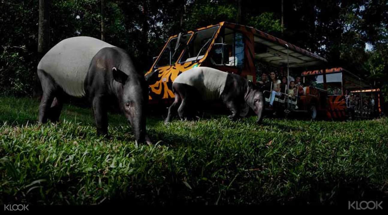animals in singapore night safari