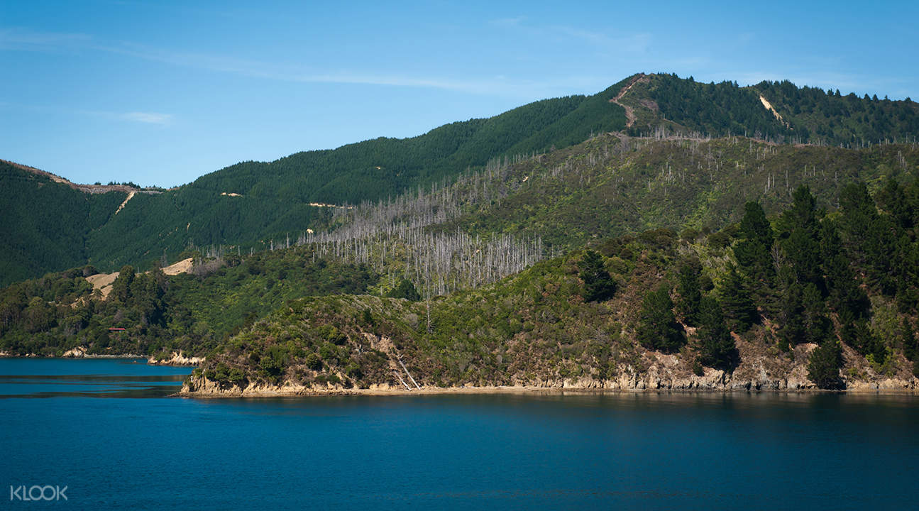 marlborough cruise with greenshell mussels