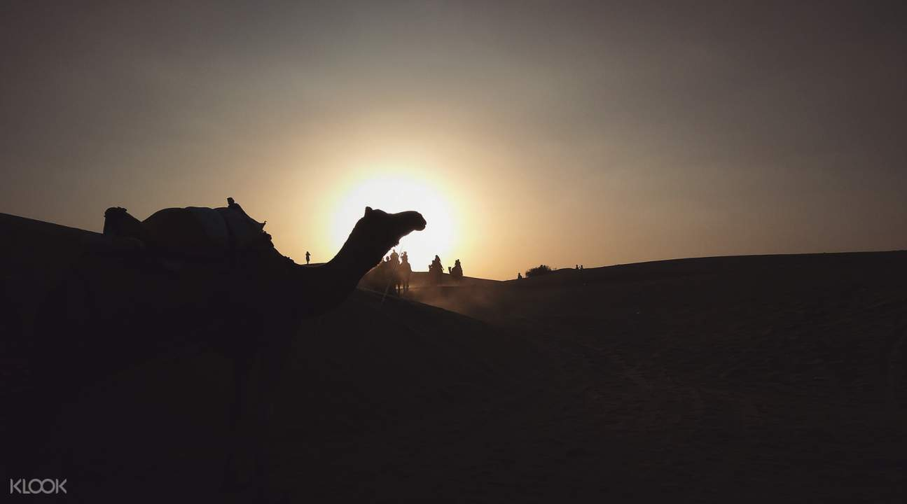 sunset with camel