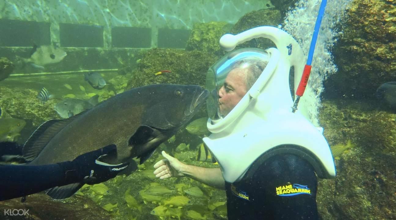ocean aquarium miami