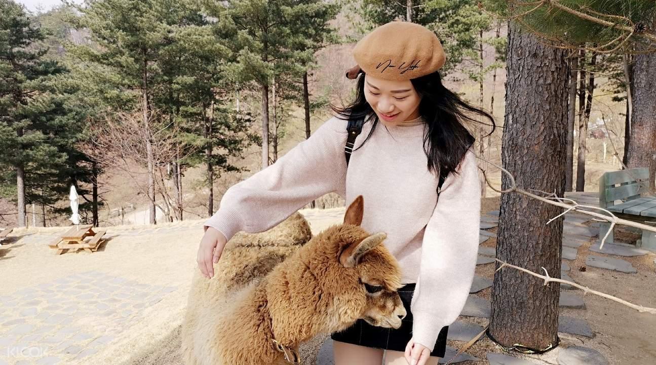 Alpaca Pasture