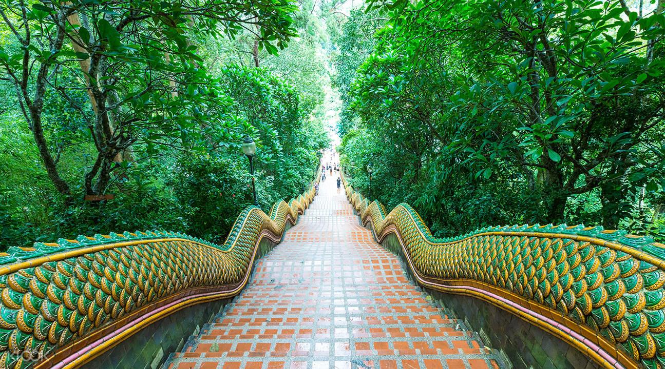 rich green forest