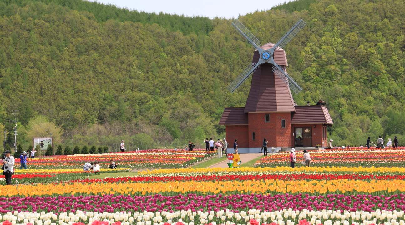 windmill and flowers in hokkaido