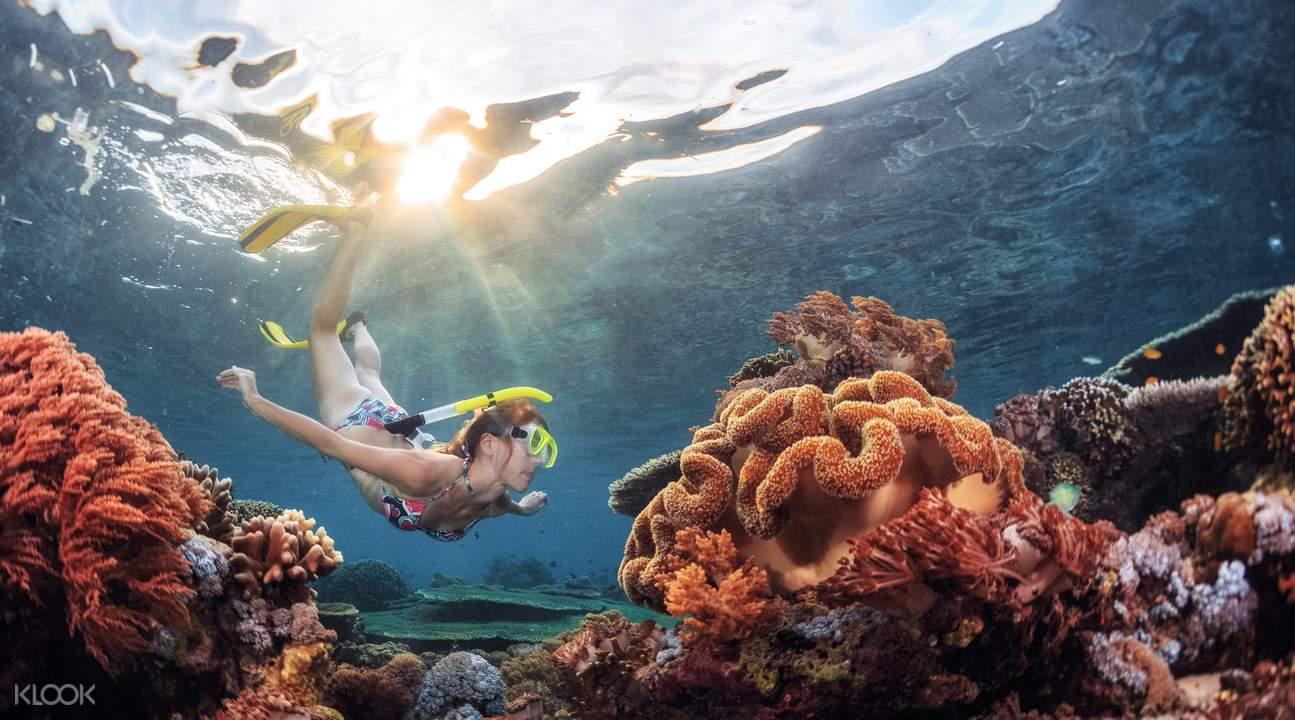 南灣外海平台式潛水體驗