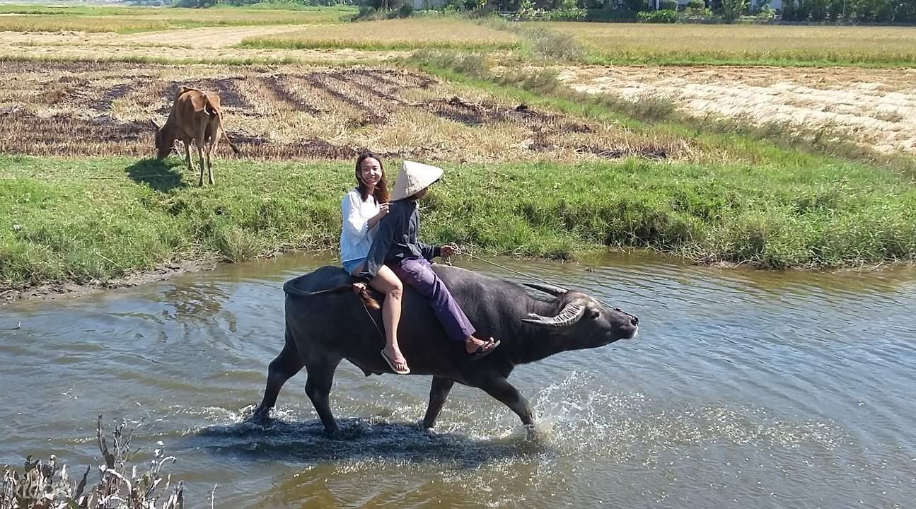 cam thanh village buffalo ride
