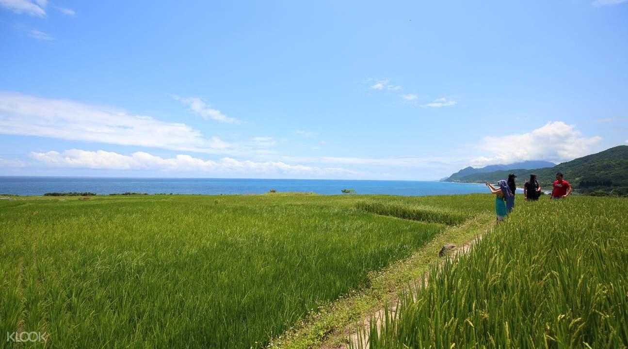 Xinshe Rice Terrace hualien tour