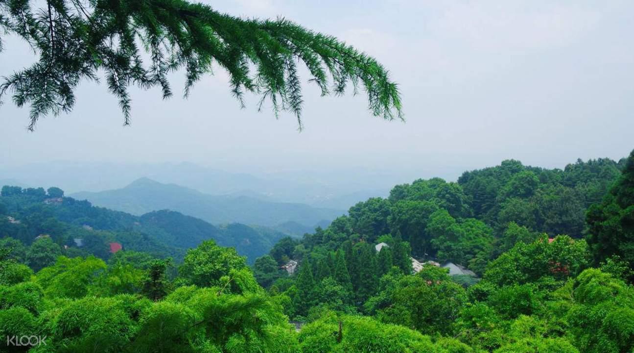 trees in mount mogan