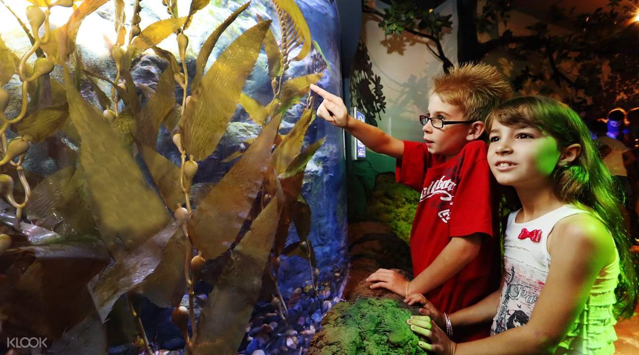 SEA LIFE Sunshine Coast Seahorse Sanctuary kids