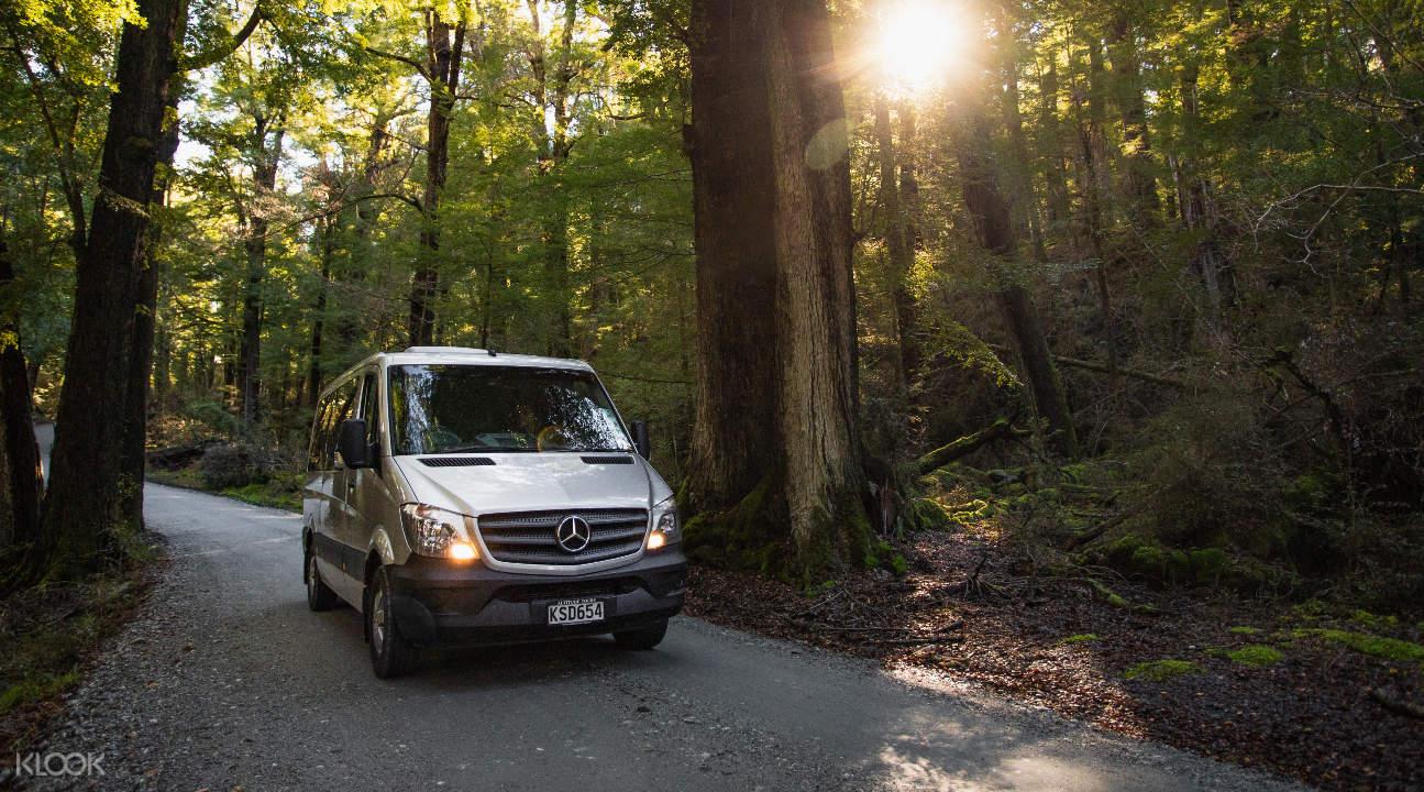 van in trees