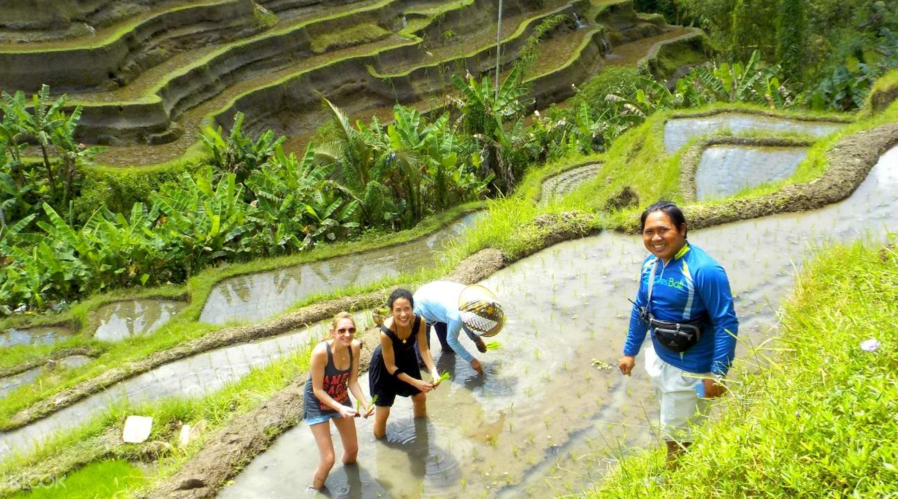 women picking plants in tegalalang rice terrace bali