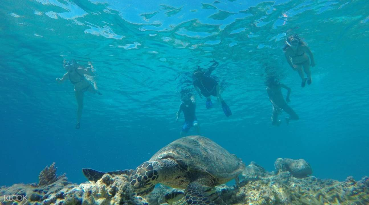 People snorkeling and looking at turtle under water in Gili Islands