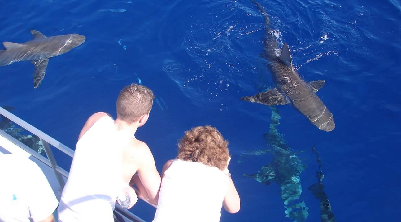 people on a boat looking at Hawaiian sharks