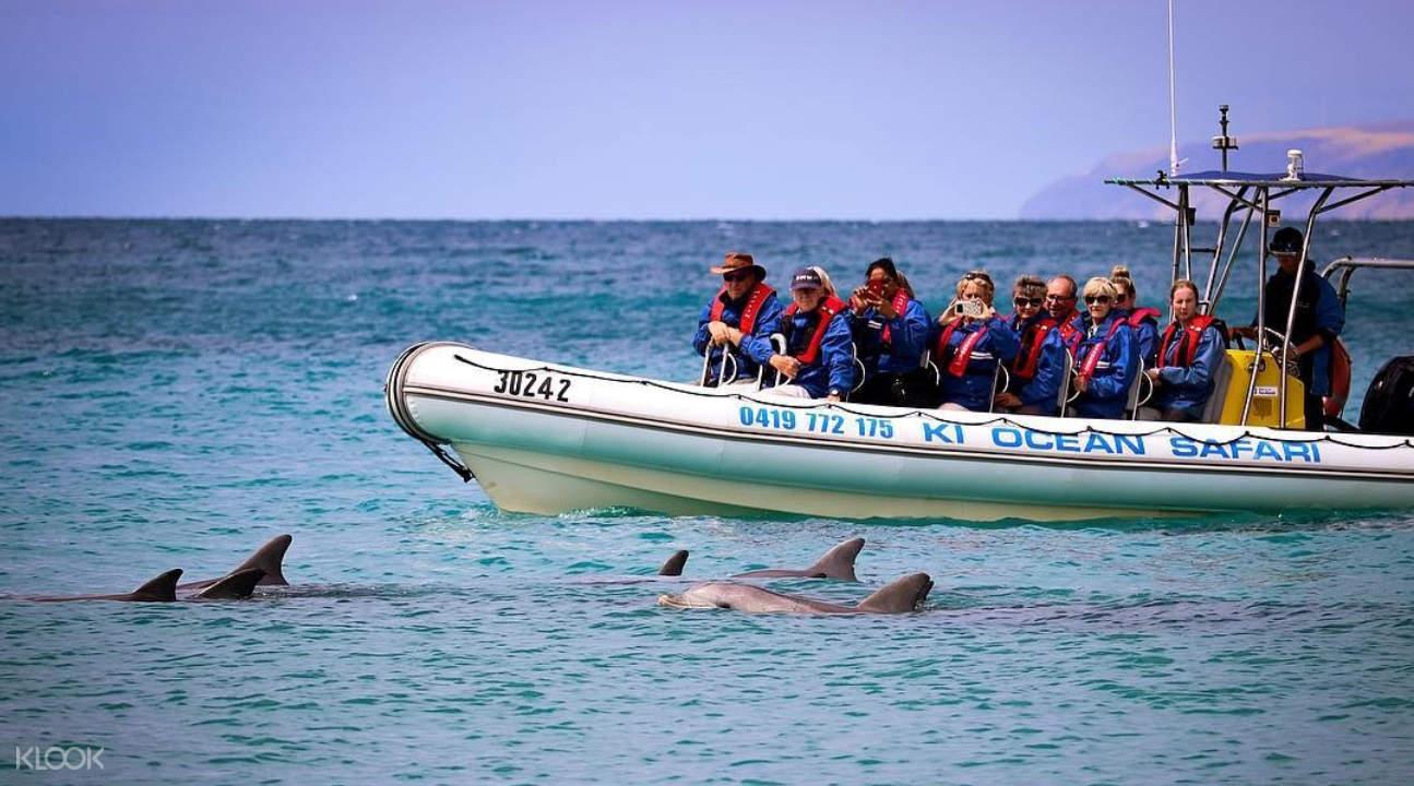 Kangaroo Island Ocean Safari Experience