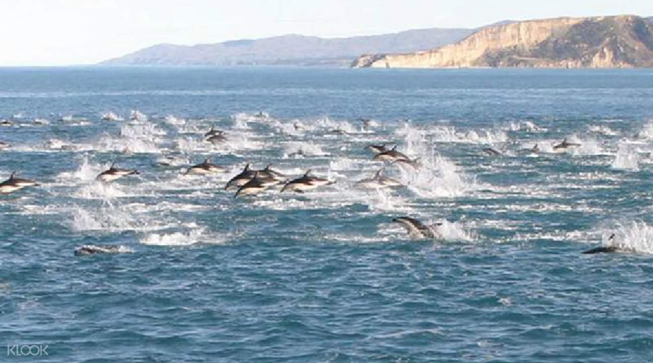 Dolphin Encounter New Zealand