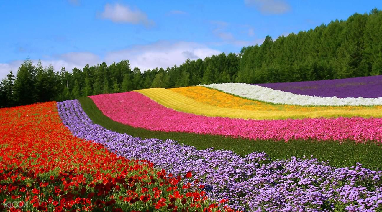 flower field in japan