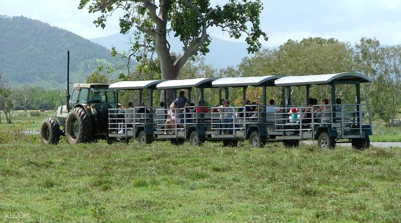 whitsunday crocodile safari wetland tour