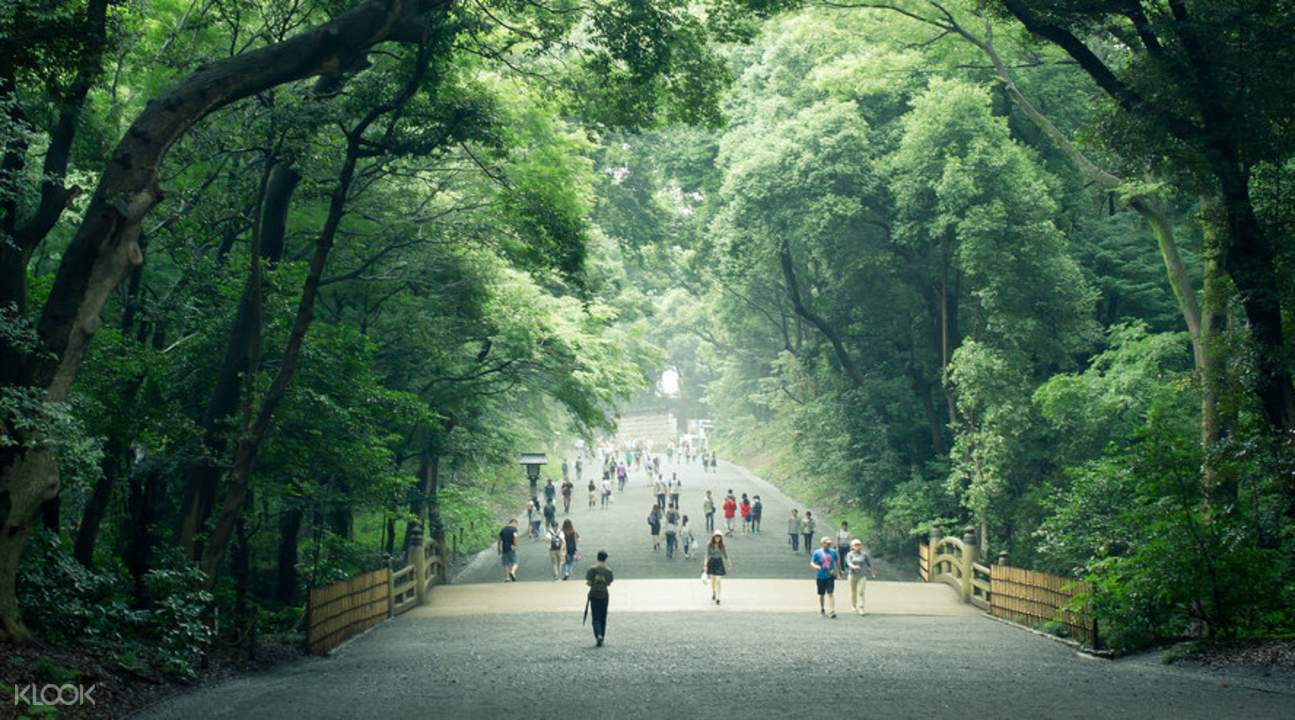 forestd area of Meiji Jingu Shrine