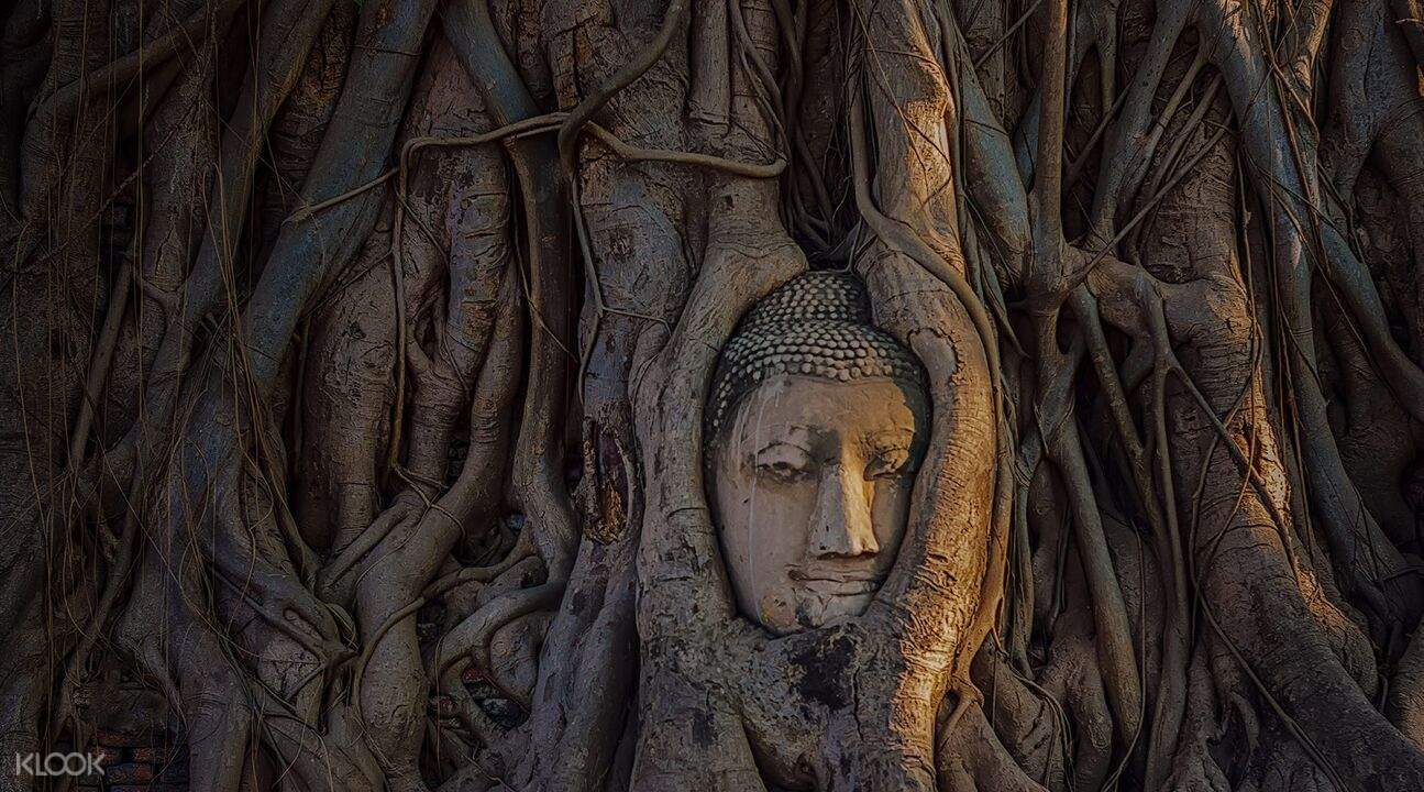 face of buddha entwined within the roots of a tree