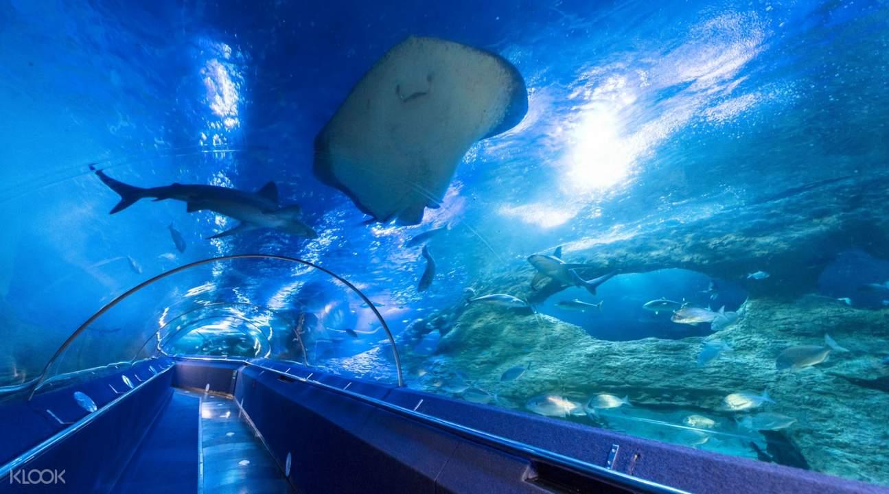 stingray seen at underwater tunnel of The Aquarium Of Western Australia