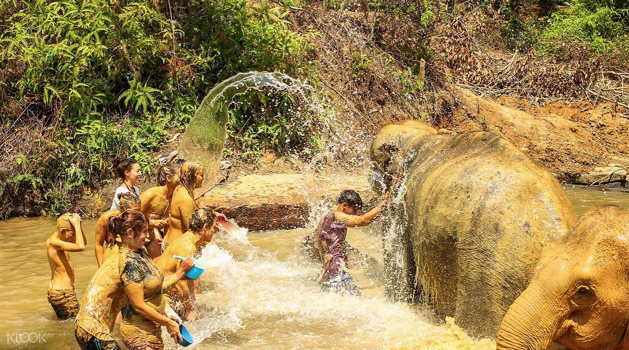 大象保护区半日游