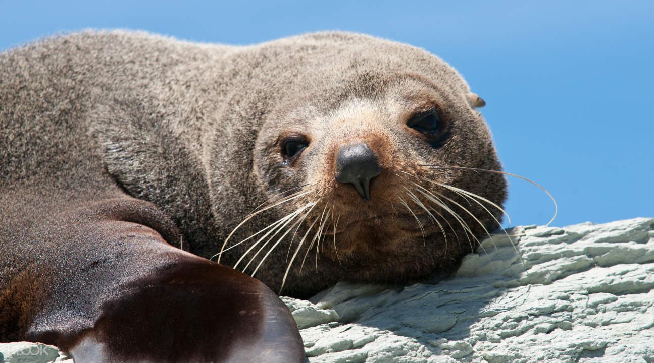 seals of Kangaroo Island
