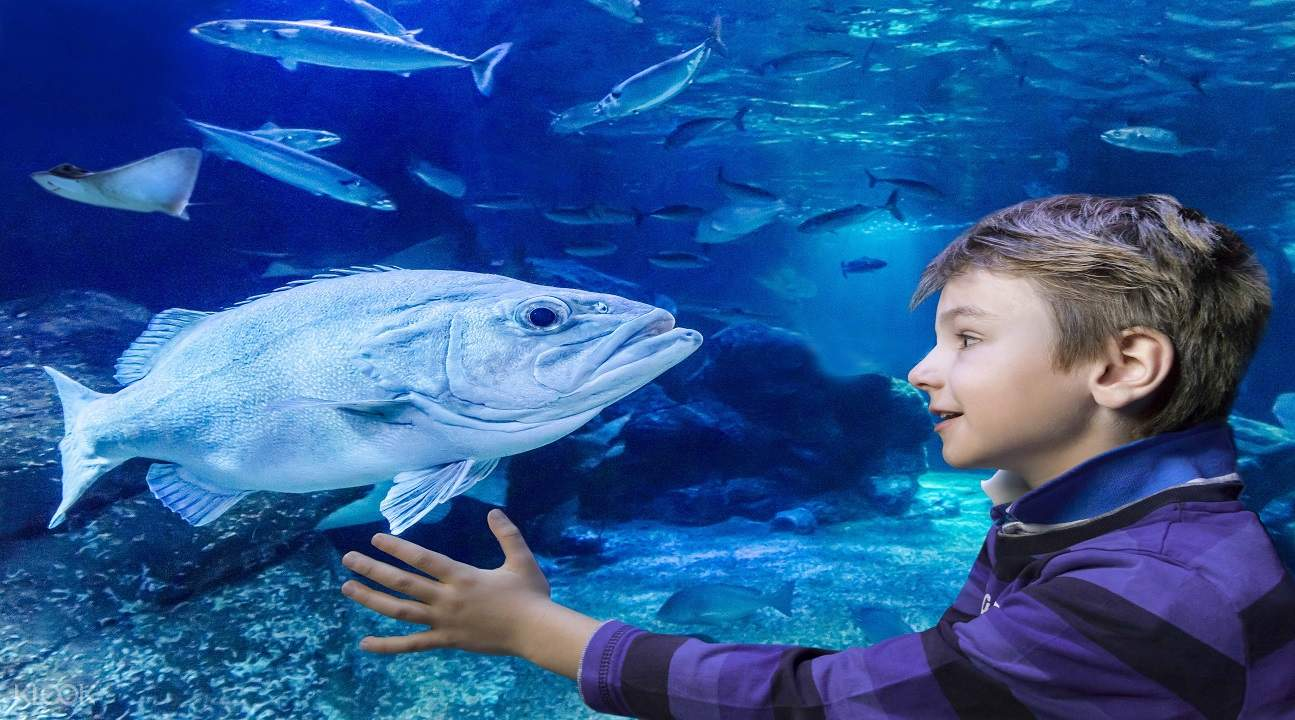 a kid looking at the fishes inside the aquarium in SEA LIFE