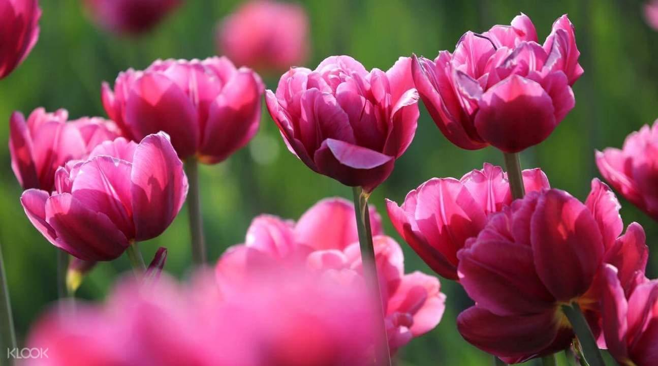 flower in japan