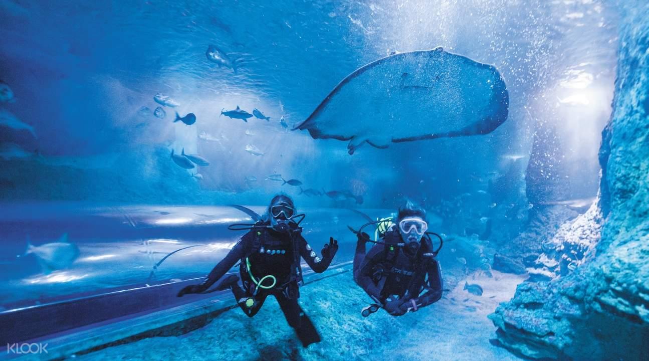 divers with stingray at The Aquarium Of Western Australia
