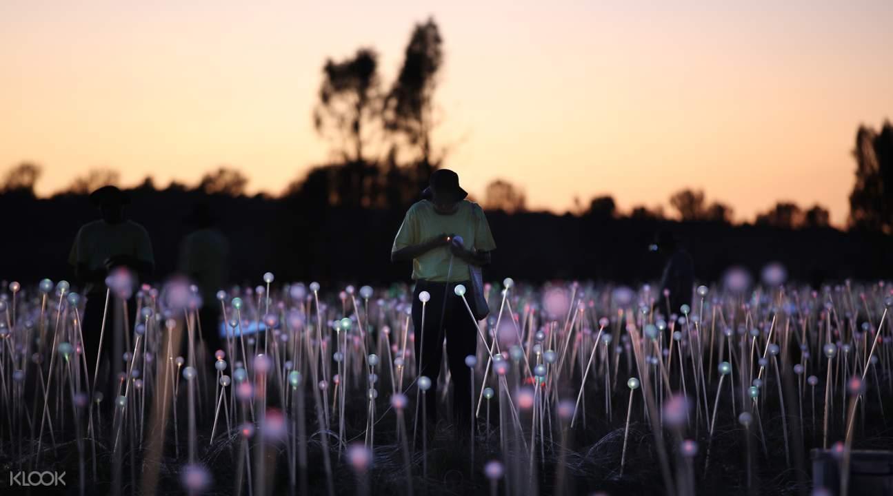 field of light uluru