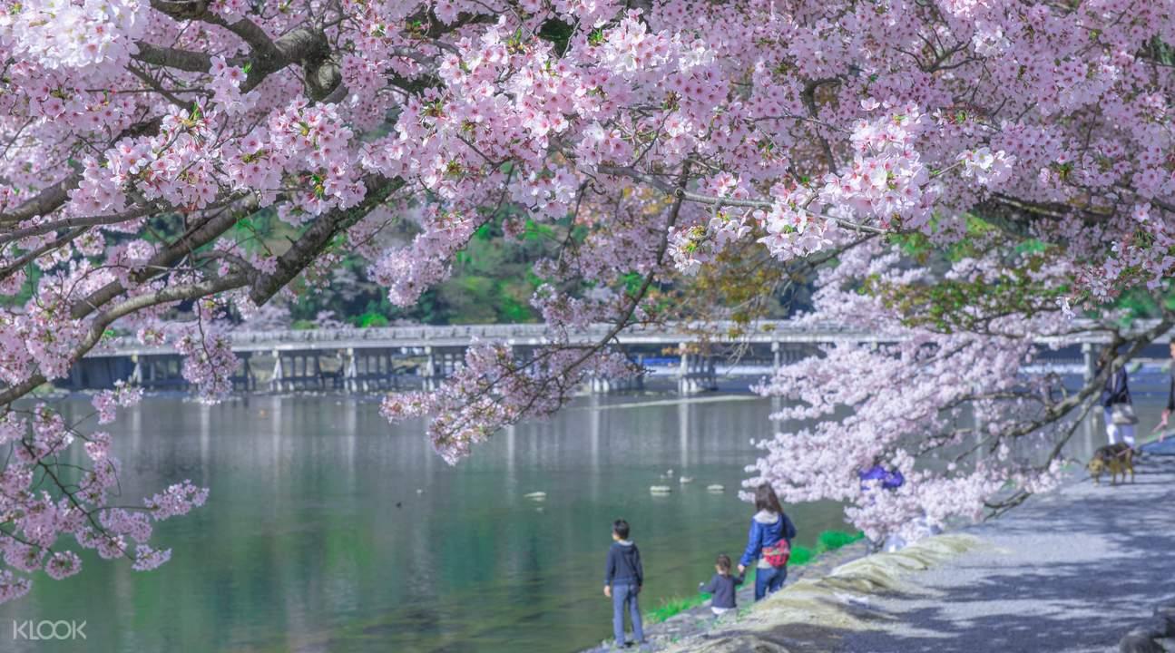 spring time Arashiyama