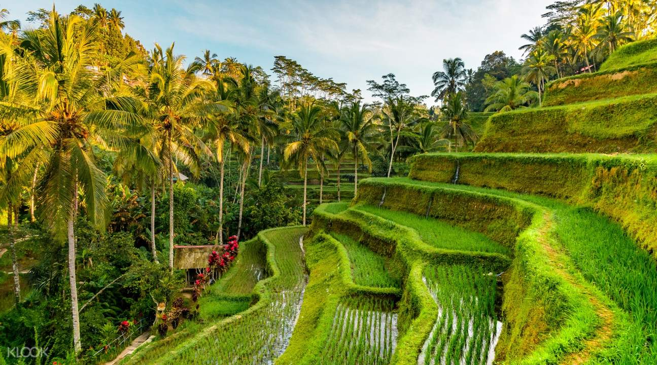 a couple at Tegalalang Rice Terraces
