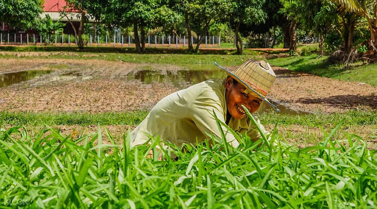 farmer in field in siem reap countryside