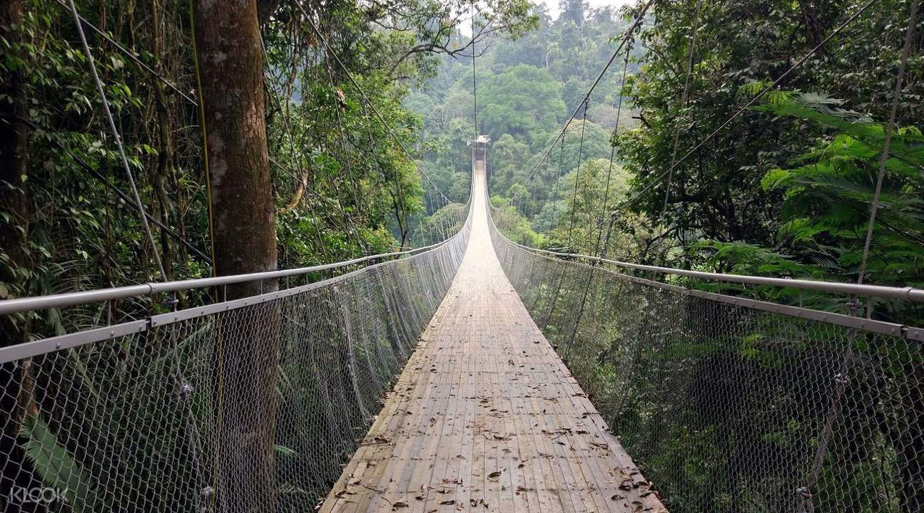 suspended bridge with forest
