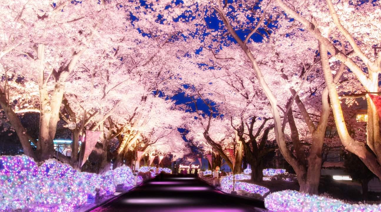 도쿄 요미우리랜드 입장권
