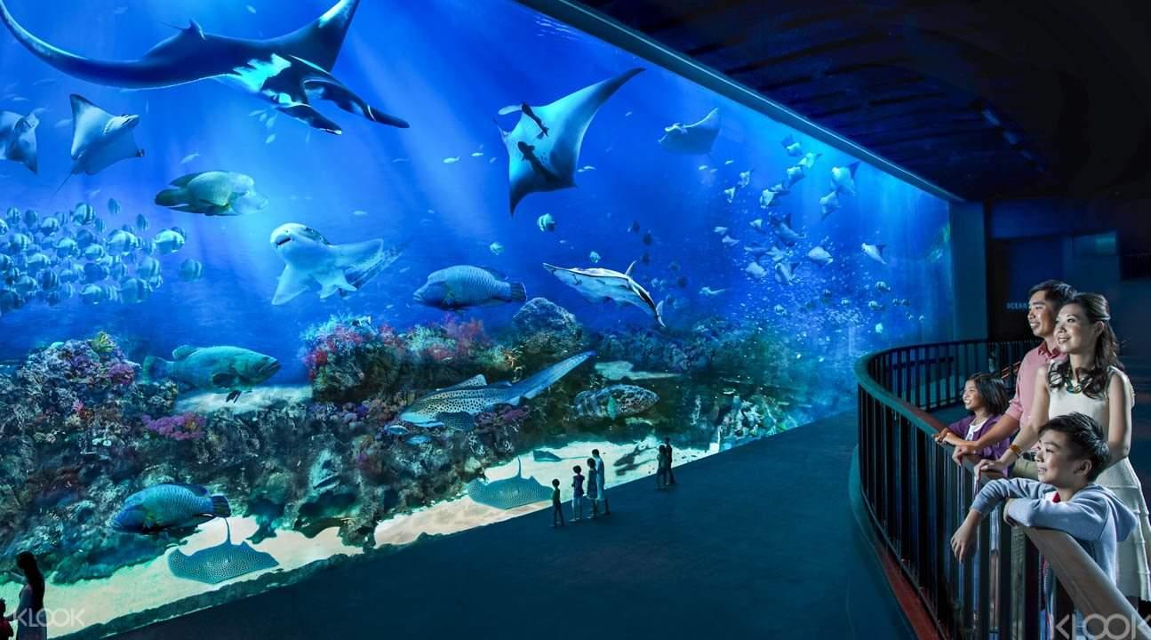 tourists looking at sea creatures in SEA Aquarium Singapore