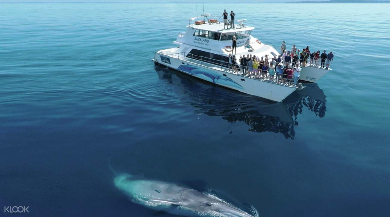 auckland whale watching