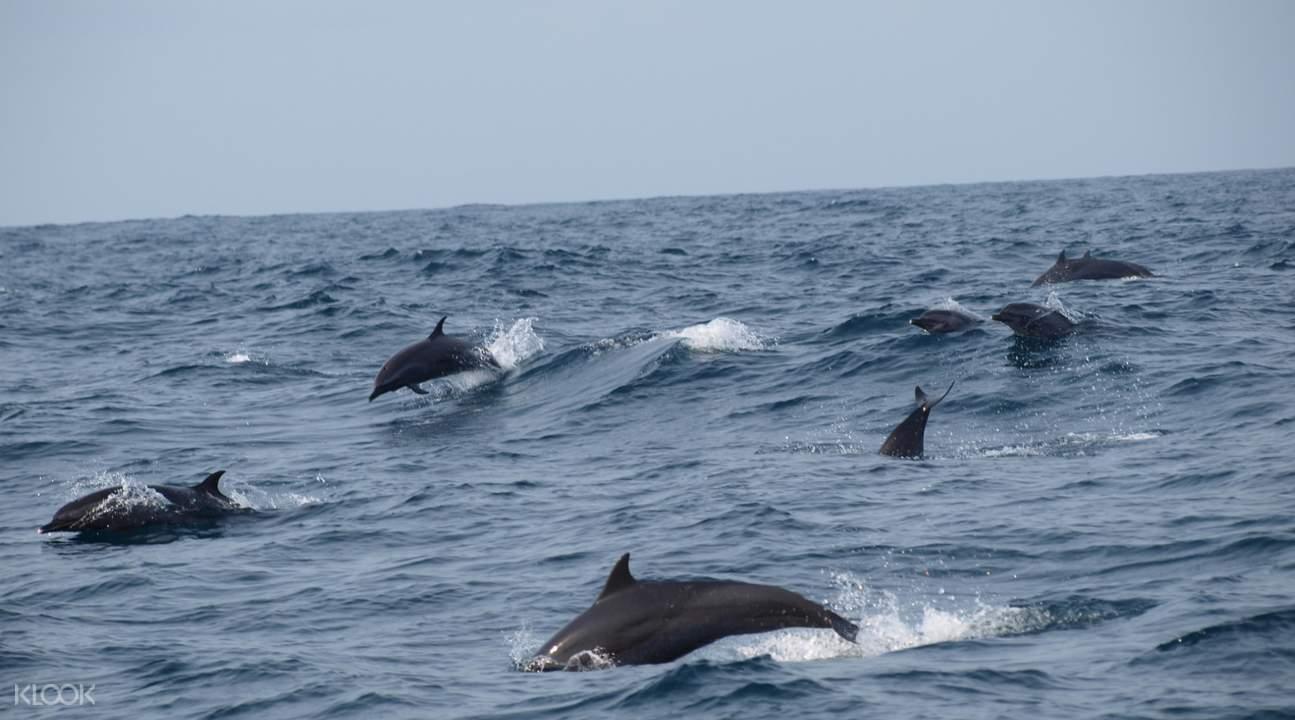 Bali Dolphin Cruise
