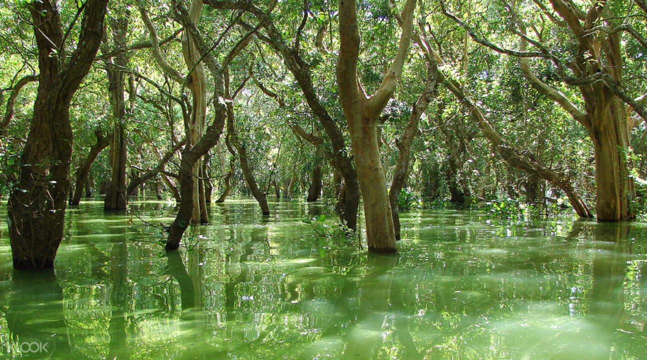 trees in kampong phluk floating village in siem reap