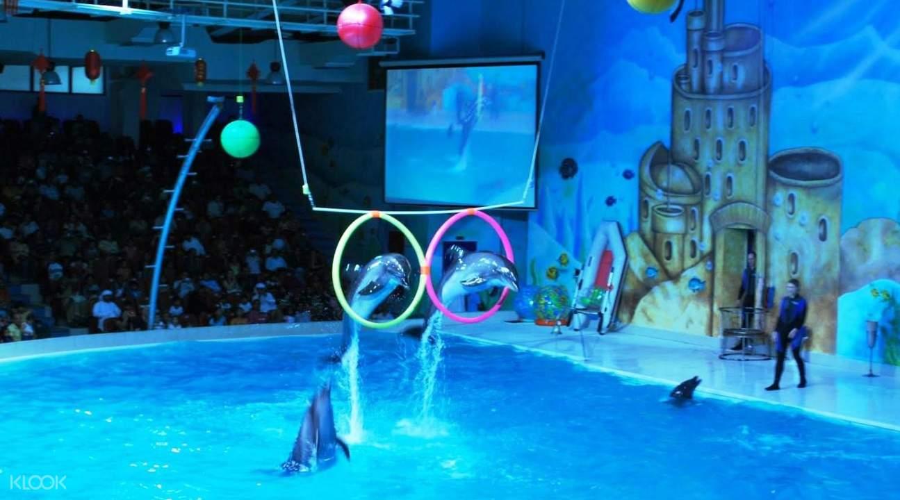 Dolphin show in Dubai