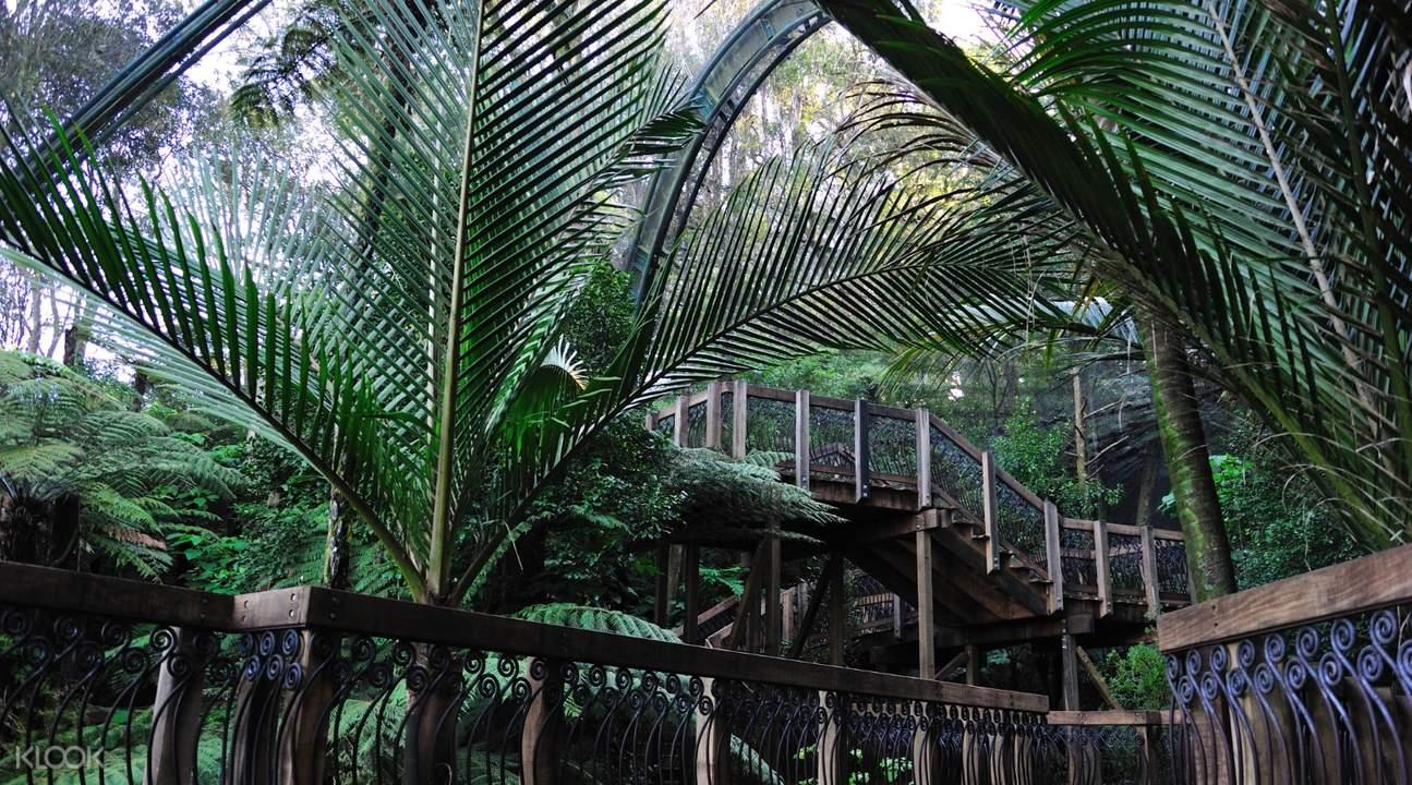 auckland zoo lemur
